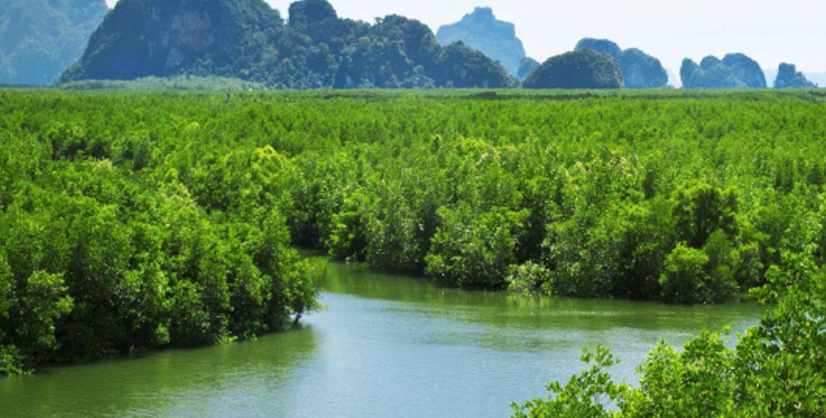 5 ป่าชายเลนเมืองไทย ที่น่าไปเที่ยวชม