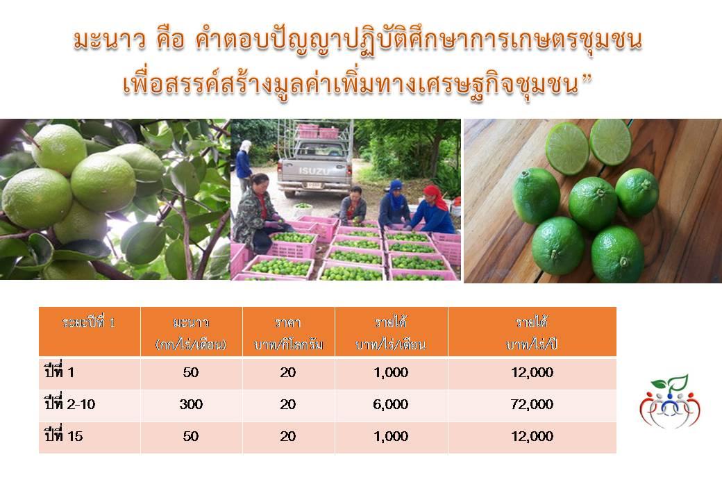 การเกษตรปลูกมะนาวตาฮิติ อินทรีย์