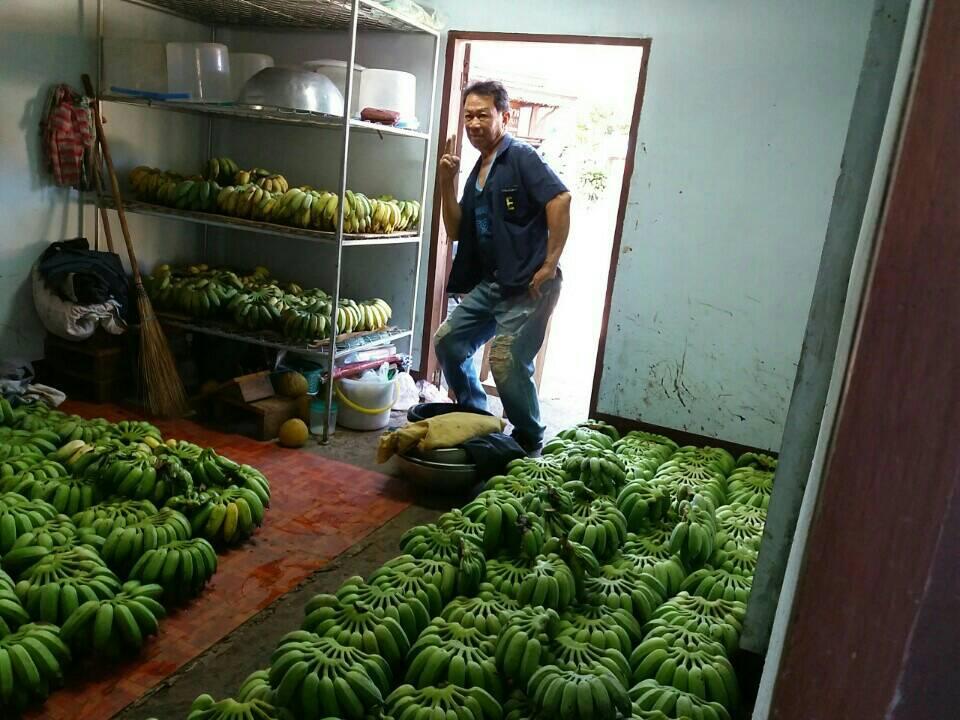 การมีส่วนร่วมในการปลูกกล้วย 50 กล้า/ครัวเรือน/ปี